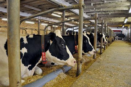 Sector lácteo: regulación nueva para Zonas Francas Permanentes Especiales   Evaluación Ecológica   Scoop.it