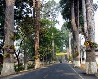 Chiang Mai Borsang and Sankampaeng Village | Chiang Mai Tourist Attractions | Scoop.it