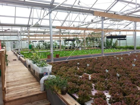 The Aquaponics Solution | Sustainable Futures | Scoop.it