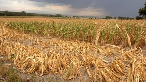 World food supply at growing risk from severe weather | Food Security | Scoop.it
