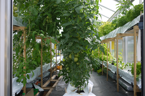 Can aquaponics feed the German capital? - SmartPlanet | FOOD TECHNOLOGY  NEWS | Scoop.it