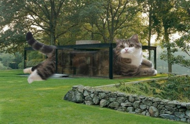 [insolite] Les LOLCATS envahissent l'architecture! | La Revue de Technitoit | Scoop.it