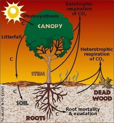 Study suggests non-uniform climate warming affects terrestrial carbon cycle, ecosystems and future predictions | Sustain Our Earth | Scoop.it