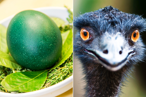 $90 emu eggs are NYC's latest dish du jour | Marketing, Business and More... | Scoop.it