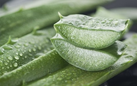 10 Aloe Vera Benefits - Why You Need It In Your Home | zestful living | Scoop.it