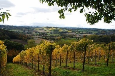 Le vin de Jurançon, un enjeu de territoire | Actu Réseau MOPA | Scoop.it