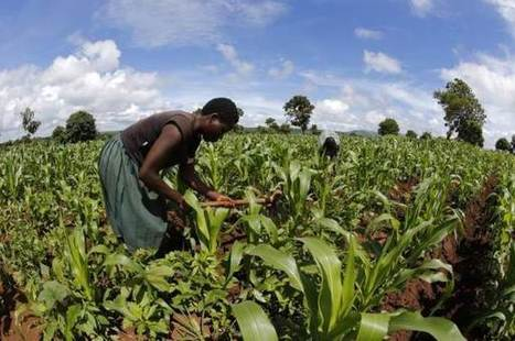 Are pro-poor benefits of Africa's 'green revolution' based on myths? | FANRPAN | Scoop.it
