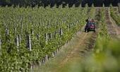 Instauration d'un système de plantation maîtrisée des pieds de vigne | Le Vin et + encore | Scoop.it