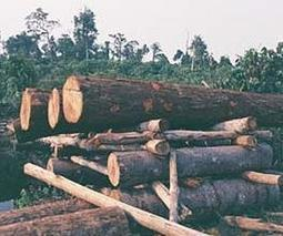 More logging, deforestation may better serve climate in some areas | Sustain Our Earth | Scoop.it