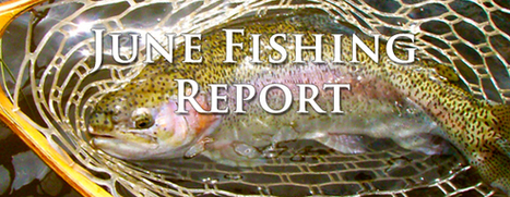 Wilder on the Taylor | Fishing Report - June 2013 | Fly Fishing | Scoop.it