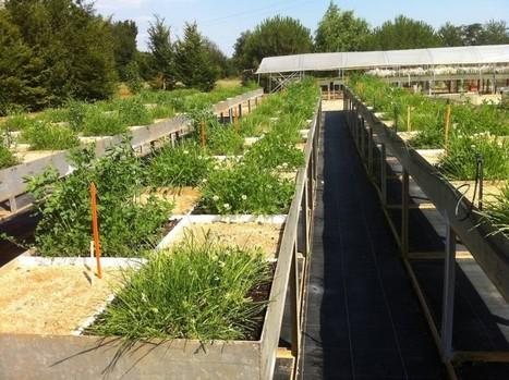 La science donne le feu vert pour la révolution du monde agricole | Transition | Scoop.it