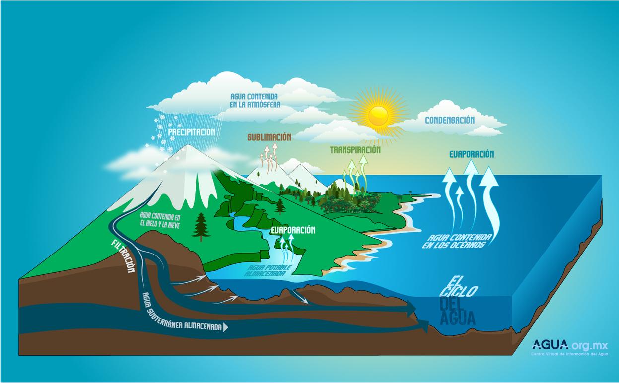 Productos de la fotofosforilacion no ciclica 55