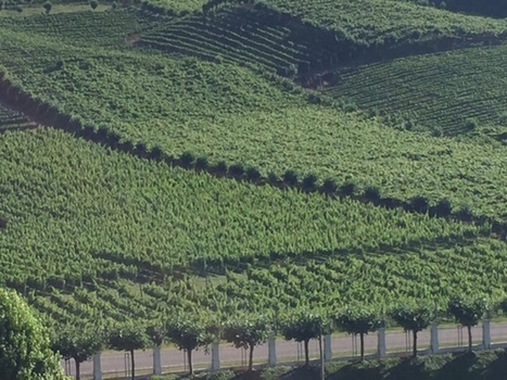 Post-Olympic Impact On Brazil's #Wine Industry: Prominent Players Weigh In | Vitabella Wine Daily Gossip | Scoop.it