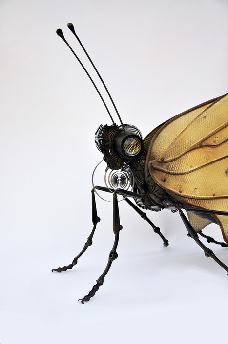 New Animal and Insect Assemblages Made from Repurposed Objects by Edouard Martinet | Colossal | Heron | Scoop.it