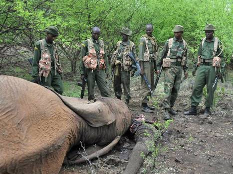 Elephant Appeal: The Kenyan canine unit putting elephant poachers off the scent | My Funny Africa.. Bushwhacker anecdotes | Scoop.it