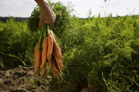 """Who Gets To Decide What Is """"Organic""""? 