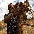 Israel helps stem global food crisis | Food issues | Scoop.it