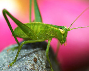 Macro Photography of Insects - A Tutorial | Photography Tips and Tutorials | Scoop.it