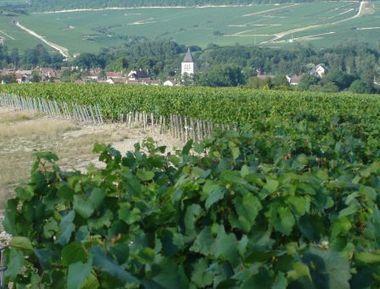 Le vignoble de Chablis obtient le précieux label « Vignobles et Découvertes » - Blog Yonne Développement | Le tourisme dans l'Yonne | Scoop.it