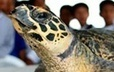 #Turtles in Trouble ~ #bycatch | Rescue our Ocean's & it's species from Man's Pollution! | Scoop.it