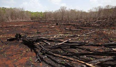 Mexique: fumée noire sur le Yucatan   Biodiversité   Scoop.it