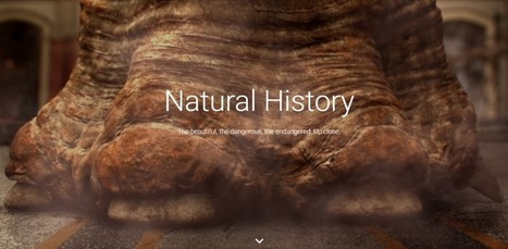 Google teams with dozens of natural history museums to bring long-gone worlds online | Navigate | Scoop.it