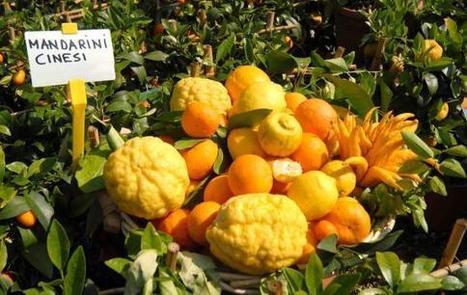VerdeMura : Mostra Mercato del giardinaggio e dei prodotti tipici - giardinaggio, vivai, appuntamenti verdi, sementi, orto, piante e fiori, biodiversità   Progettazione e manutenzione giardini   Scoop.it
