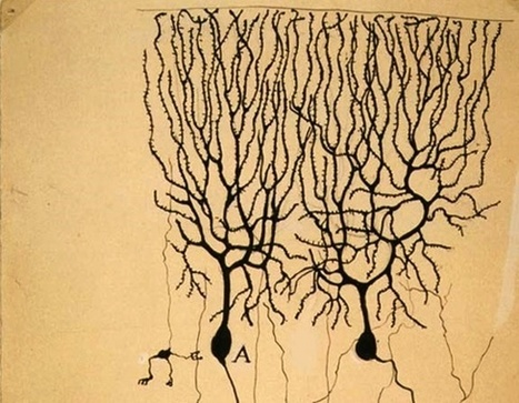 Happy Birthday to the Father of Modern Neuroscience, Who Wanted to Be an Artist | Complexity and Emergence | Scoop.it