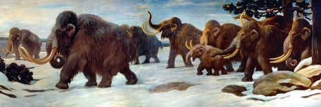 Mammoth populations were decimated by humans 30,000 years ago | Archaeology News | Scoop.it