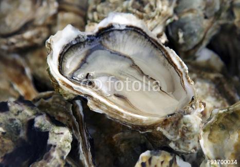 Les huîtres menacées par les micro-plastiques dans les océans | HALIEUTIQUE ECOLOGIE MARINE | Scoop.it