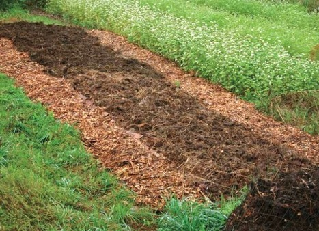 Permaculture Q&A: Mulching Options for Your Garden - Chelsea Green | Permaculture, Homesteading & Green Technology | Scoop.it
