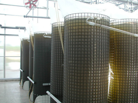 microalgae systems | world as cohabitat | Scoop.it