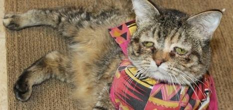 Tucker, ou la belle histoire du chat le plus triste du monde devenu le plus convoité | CaniCatNews-actualité | Scoop.it