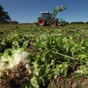 Plowed Under: German Farmers Hit Hard by E. Coli Outbreak - SPIEGEL ONLINE - News - International | Food issues | Scoop.it