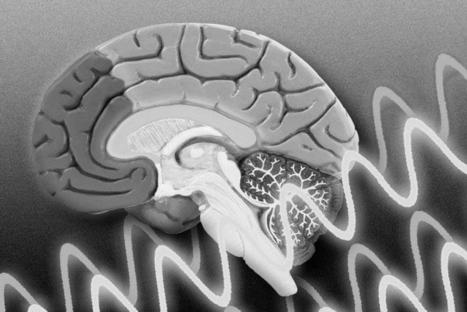 El modo en que las ondas cerebrales guían la formación de recuerdos | Neurociencia y psicología | Scoop.it
