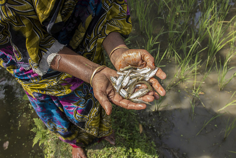 Small fish, big benefits - Water, Land and Ecosystems | Sustainable Futures | Scoop.it