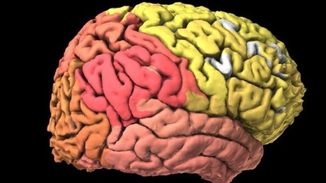 Crean el primer atlas interactivo del cerebro | Science by Arancha | Scoop.it
