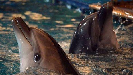Un delphinarium ravive le débat sur la cruauté envers les animaux en Asie Centrale | Biodiversité & Relations Homme - Nature - Environnement : Un Scoop.it du Muséum de Toulouse | Scoop.it