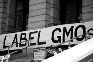 GMO Labeling Prop 37: November 6 Is D-Day for the Food Movement - Organic Connections | Searching for Safe Foods | Scoop.it