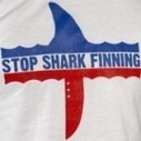 What can you do to stop #shark finning? | Via @VidarOceans Protecting the Oceans | Scoop.it