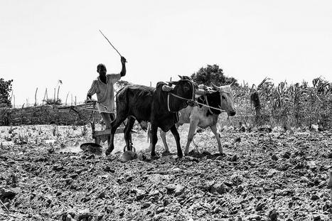 Le secteur agricole africain : les défis à relever   Questions de développement ...   Scoop.it