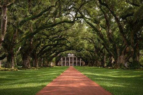 Skip New Orleans' French Quarter and visit the area's plantations | Oak Alley Plantation: Things to see! | Scoop.it