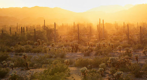 Study finds, almost one third of all cactus species are on the verge of extinction | Amazing Science | Scoop.it