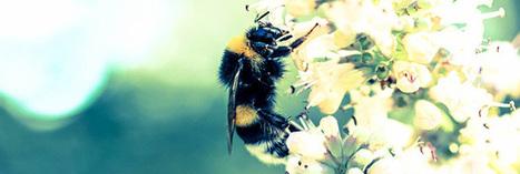 Pesticides toxiques pour les abeilles : l'ANSES alerte | Apis apiculture - des formations en apiculture et des infos apiculturelles | Scoop.it