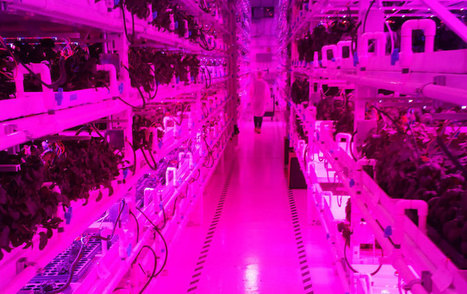 Astronauts and Arugula: Using Space-Station Technology to Grow Food - Modern Farmer | Vertical Farm - Food Factory | Scoop.it