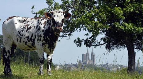 Comment évolue le paysage Coutançais sur les cinq dernières années ? - Ouest France | Revue de presse sur l'agriculture, l'environnement, le territoire, l'agroalimentaire en Normandie | Scoop.it