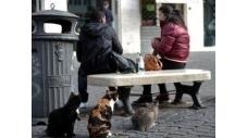 Italie: bisbilles à Rome sur la présence de chats au milieu de ruines ... - Le Nouvel Observateur | Net-plus-ultra | Scoop.it