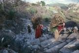 La FAO invite à soutenir l'agriculture familiale de montagne | Société durable | Scoop.it
