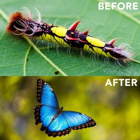 Exotic caterpillars and the beautiful winged insects they become   Books, Photo, Video and Film   Scoop.it