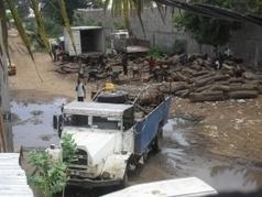 Les Chinois pillent la forêt Casamançaise | arts premiers | Scoop.it